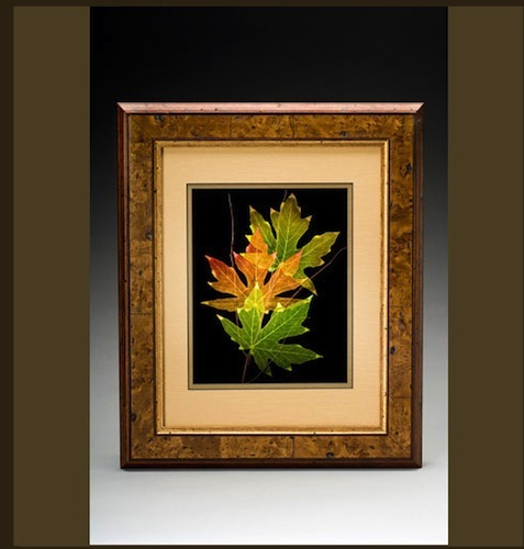 Three Framed Leaves