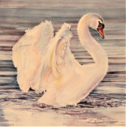 Swan Lake 17 x 17 Framed