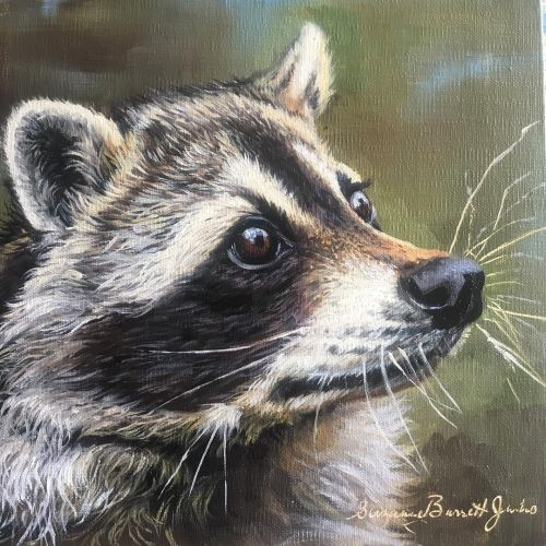 Pensive Racoon 14.5 x 14.5 Framed