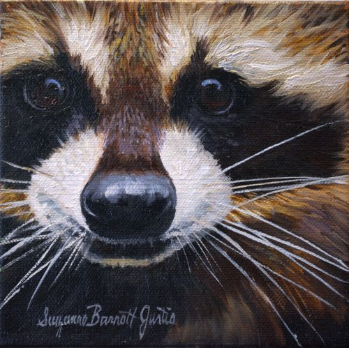 Raccoon Face 6 x 6