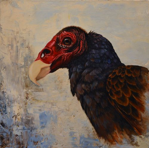 Turkey Vulture 24 x 24